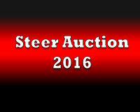 Steers Auction 2016