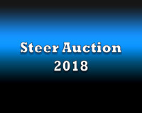 Steers Auction 2018