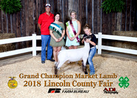 8444 Tinleigh Spoonster Grand Champ Lamb