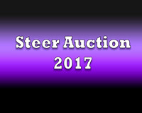 Steers Auction 2017